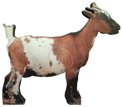 Goat-Chèvre-Cabra-Cabra (80 x 75 cm) Image