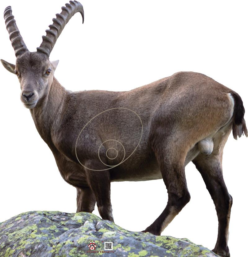Mountain Goat-Chèvre de montagne-Cabra Montés-Cabra de Muntanya (115 x 119 cm) Image