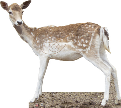 Daina-Gamo-Fallow_Deer-Cerf