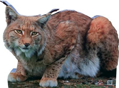 Lynx-Lynx-Lince-Linx (55 x 42 cm) Image
