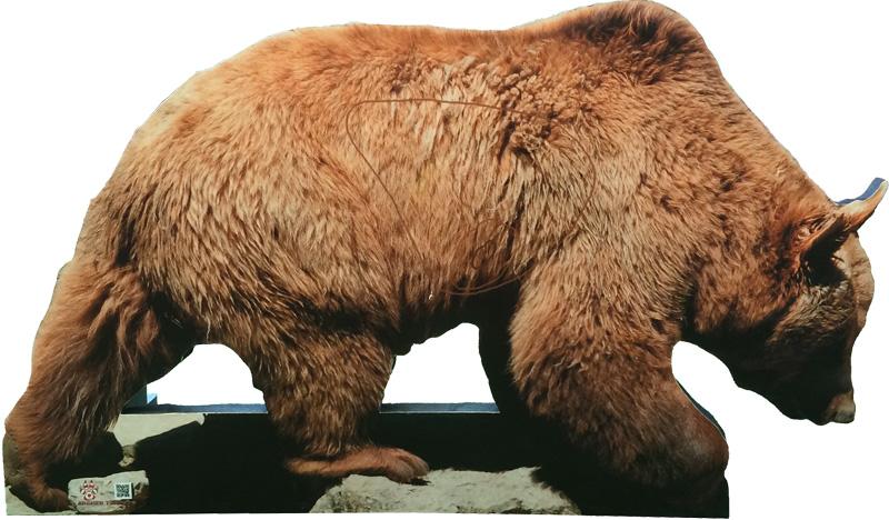 Os-Oso-Bear-Ours