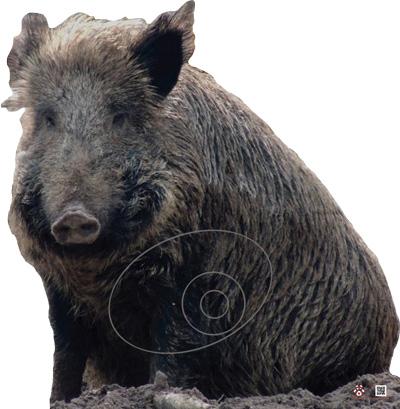 Wild boar-Verrat-Jabalí-Senglar (86 x 88 cm) Image