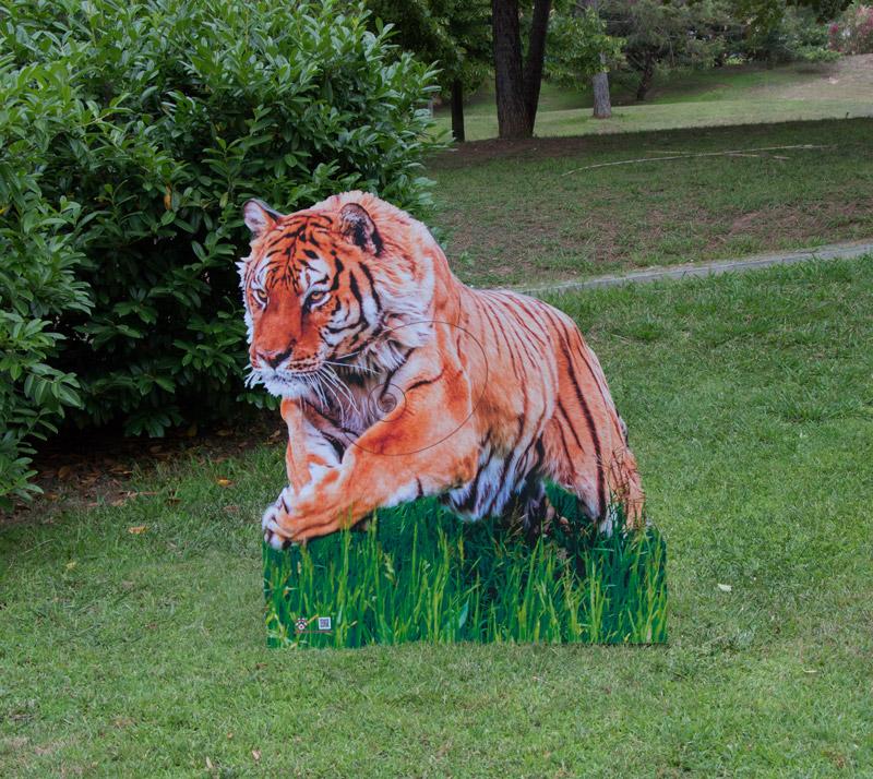 Tiger-Tigre-Tigre-Tigre