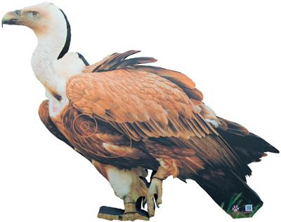Vulture-Vautour-Buitre-Voltor (93 x 80 cm) Image