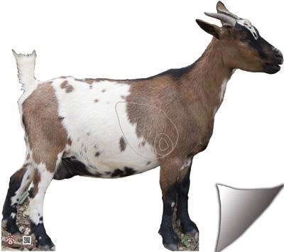 Cabra-Cabra-Goat-Chèvre