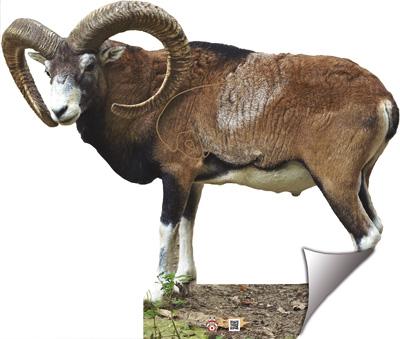 Mufló-Muflón-Mouflon-Mouflon