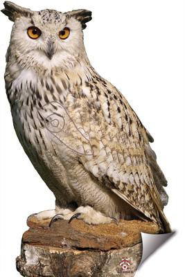 Mussol-Búho-Owl-Hibou
