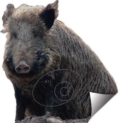 Senglar-Jabalí-Wild_Boar-Verrat